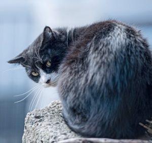 後ろを振り返った猫