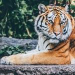 マネーの虎の同窓会の紹介記事から故藤山寛美さんに辿り付いた話